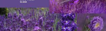 Цъфтяща 2018 – та година с изборът на Pantone Ultra Violet, 18-3838